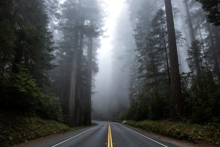 Driving Avenue Of The Giants