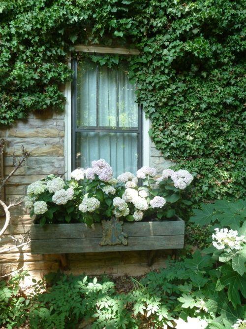 jardineira000