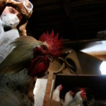 Russia records first cases of human infection with bird flu strain H5N8