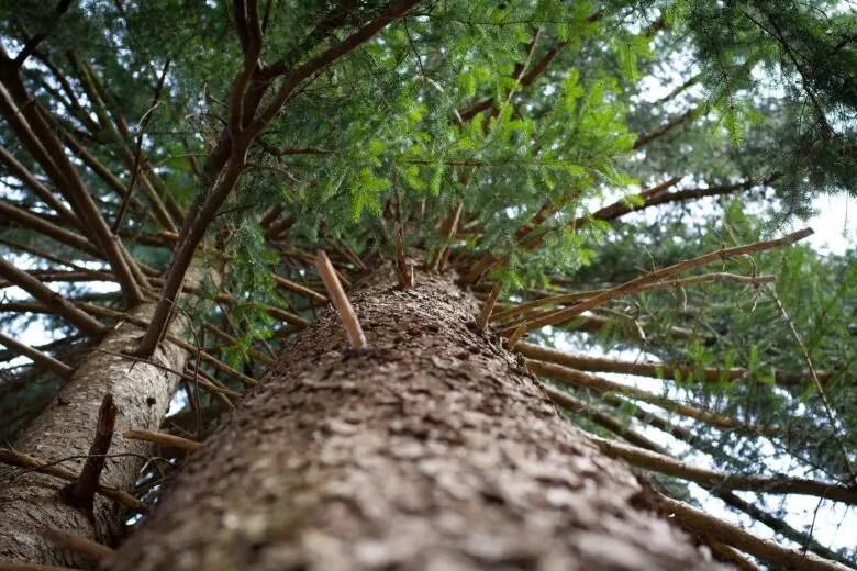 ハンドメイド向けの木材、針葉樹がきっかけ。木の香りや手触りを楽しもう