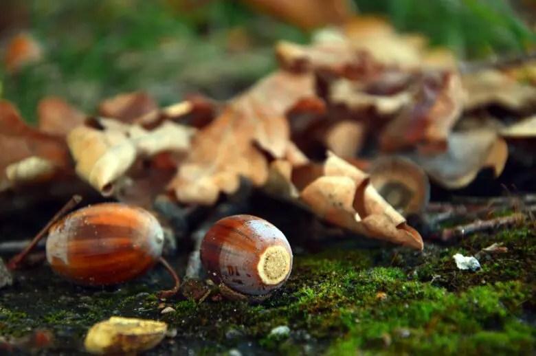 木材選びシリーズ、オーク材がきっかけ。オークの特徴と木目の出方について