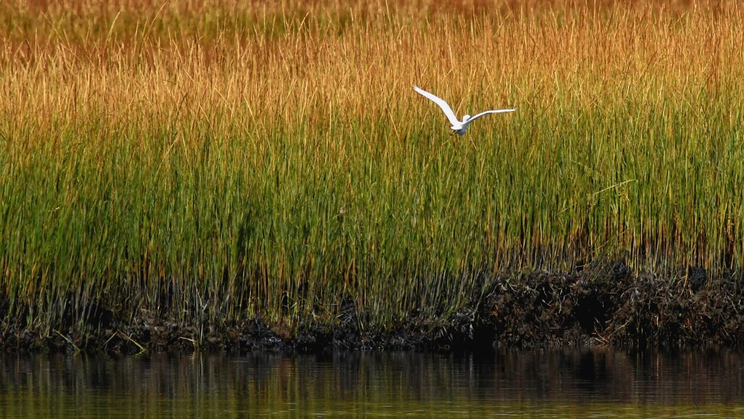 Egret marsh, Ocean City