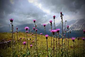 Giochi di luce, fiori e nuvole al Monte Elmo