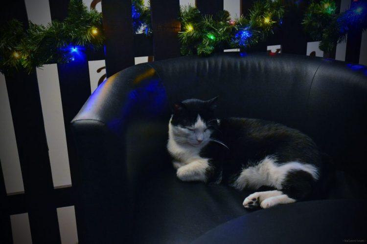 pausa caffè gattosa in una poltroncina nera con lucine di natale