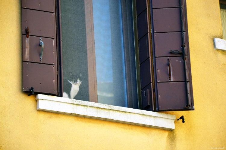 simpatico gatto bianco e nero che fissa i passanti dalla finestra