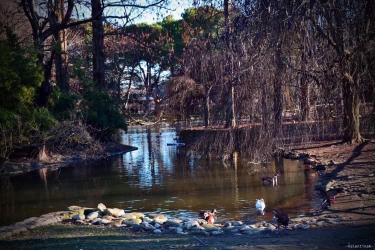 laghetto e atmosfere invernali al parco bucci