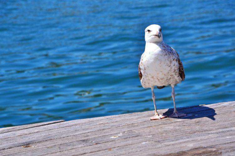 sabato d'estate a marina di ravenna: gabbiano pronto per il divertimento