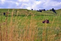 erba gialla, prato verde, maso in legno, cielo e nuvole all'alpe di siusi