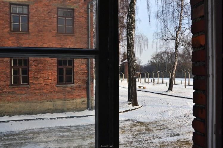 auschwitz-birkenau 27 gennaio: vista da una finestra di una baracca