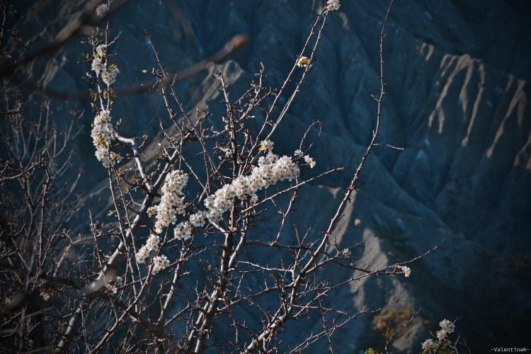 contrasti tra fiori bianchi e calanchi al tramonto