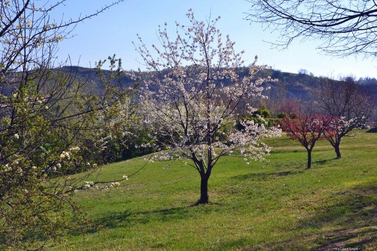 alberi in fiore e prati verdi al parco regionale dei gessi bolognesi e calanchi dell'abbadessa