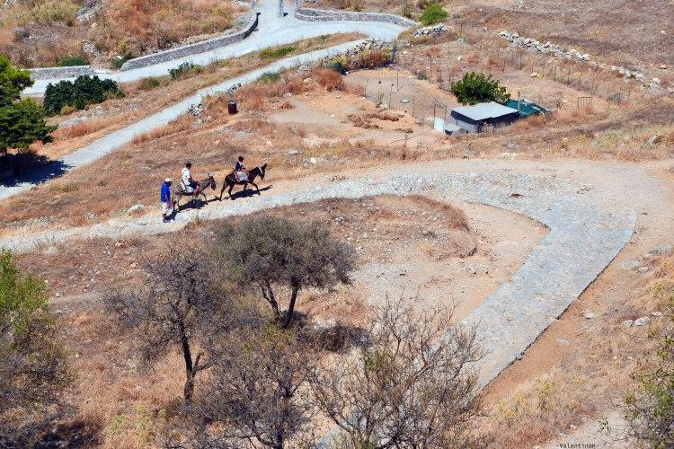 due asinelli risalgono il sentiero desertico per l'acropoli di lindos