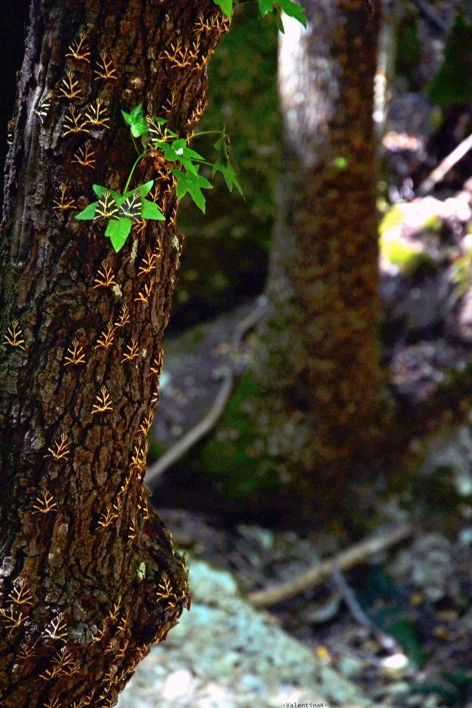 farfalle sugli alberi presso la valle delle farfalle di rodi