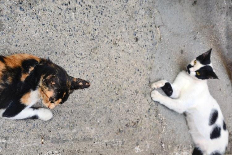 dove mangiare a corfù: gatti pigri fuori dalle taverne in attesa di cibo