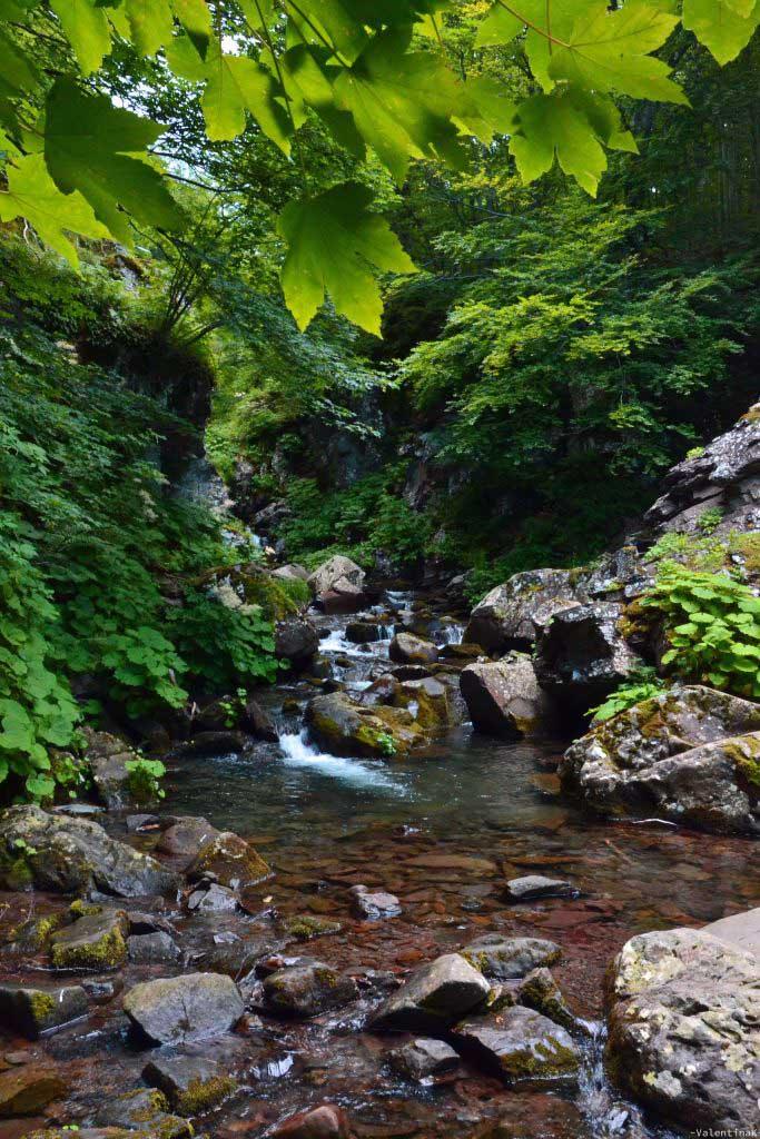 gita alle cascate del dardagna: il torrente dardagna, al di sopra delle cascate