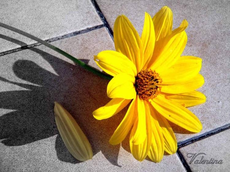 fiore giallo autunnale