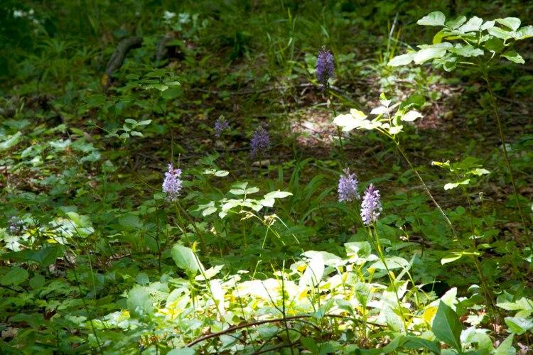 prati e orchidee sul sentiero per la cascata dell'acquacheta