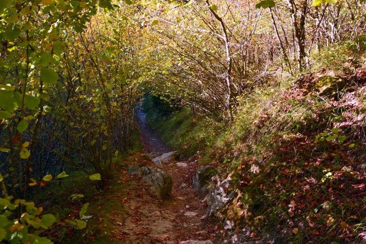 cascata dell'acquacheta: sentiero nel bosco in autunno