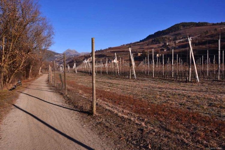 sentiero invernale che costeggia prati e vigneti