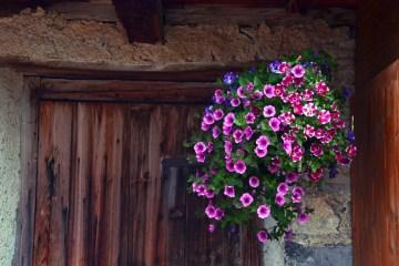 l'arte di tornare negli stessi posti: fiori rosa e viola e porte di legno