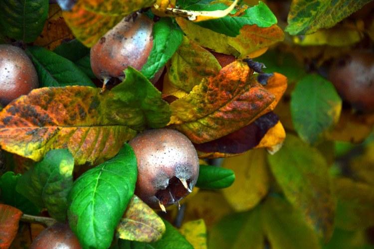 sagre d'autunno in emilia-romagna: sagra dei frutti dimenticati a casola valsenio