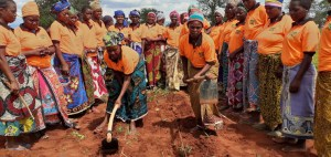 Women applying organic farming methods