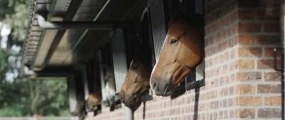 loddon stables (84)