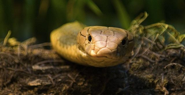 snakelunky