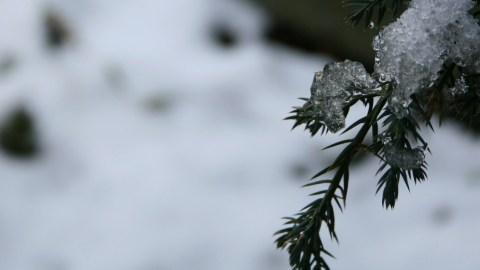 quiet_year_snow_tree-001