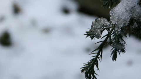 quiet_year_snow_tree-001