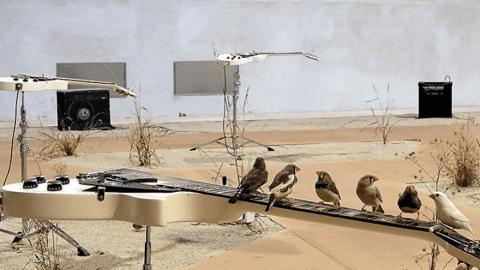 guitarbirds