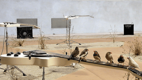 guitarbirds