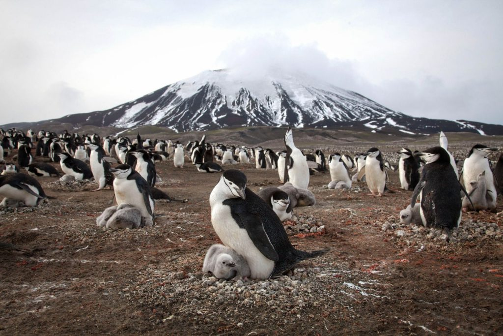 planet-earth-penguins2