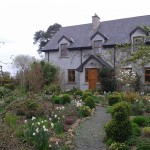 Kilmurry Nursery, garden