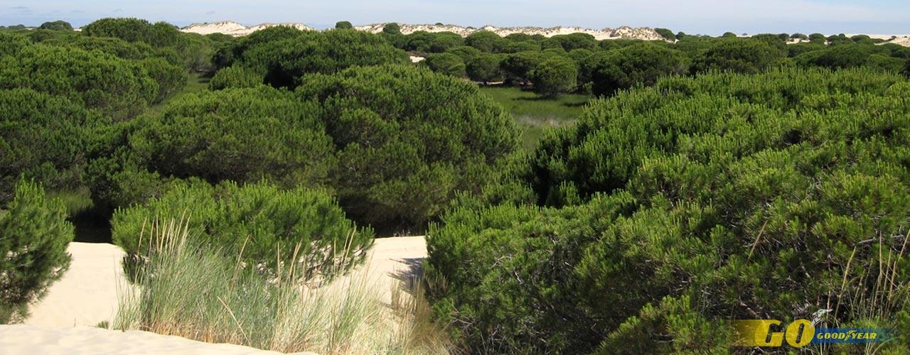 Dunas de Doñana