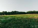 Land for Sale Decatur County Iowa-10