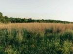 Land for Sale Decatur County Iowa-13