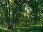 Land for Sale Decatur County Iowa-16