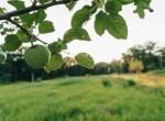 Land for Sale Decatur County Iowa-33