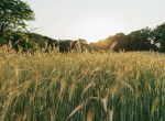 Land for Sale Decatur County Iowa-39