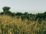 Land for Sale Decatur County Iowa-40