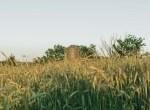 Land for Sale Decatur County Iowa-41