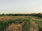 Land for Sale Decatur County Iowa-45