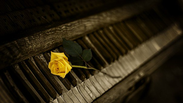 A Yellow Rose on a Rotting and Ruined Piano
