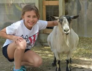 Canada Quebec Granby Zoo Goat