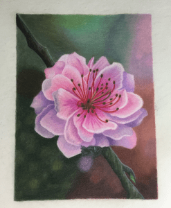 Cherry Blossom Tutorial, CP Florals, Cynthia Knox - created by Kim Holden