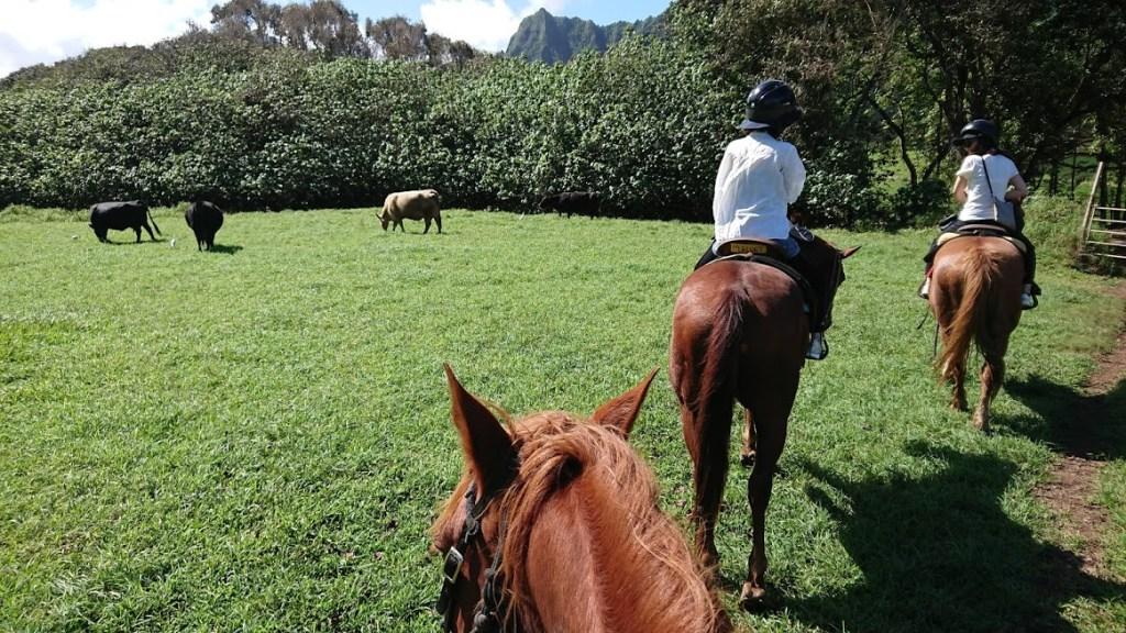 クアロアランチ乗馬