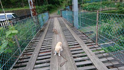 龍神温泉 吊り橋のCreaとSora