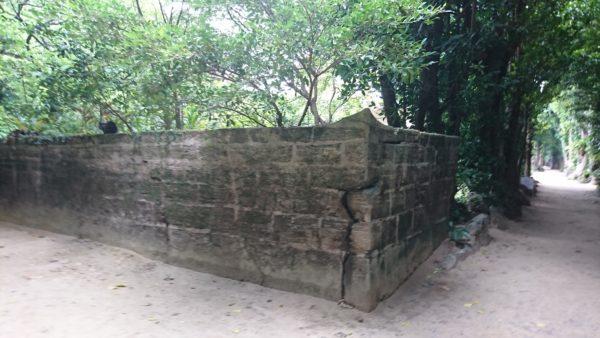 フクギ並木道にある屋敷の壁