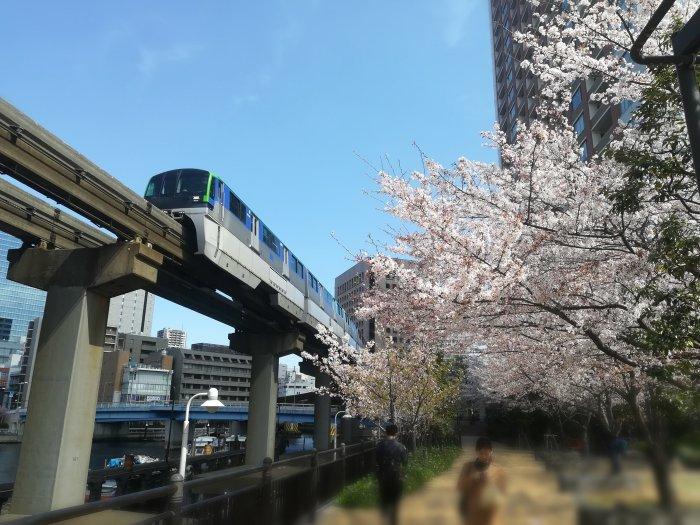 芝浦アイランドグローヴタワー横の桜並木